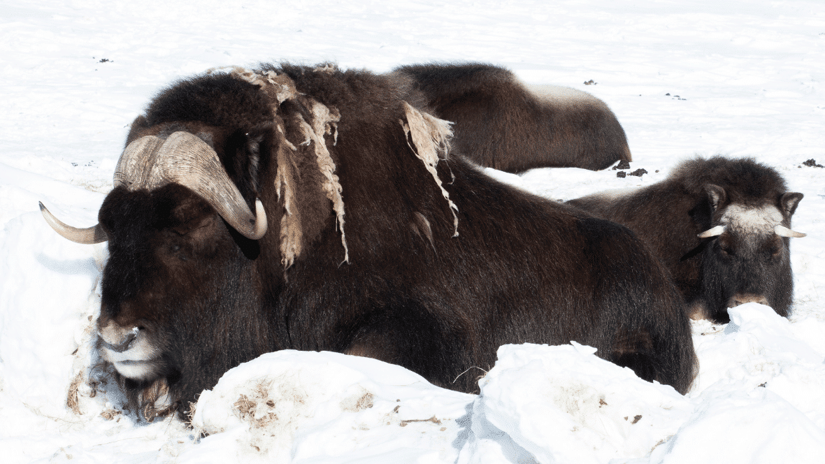 wildsafari noorwegen krab os vogels walvis