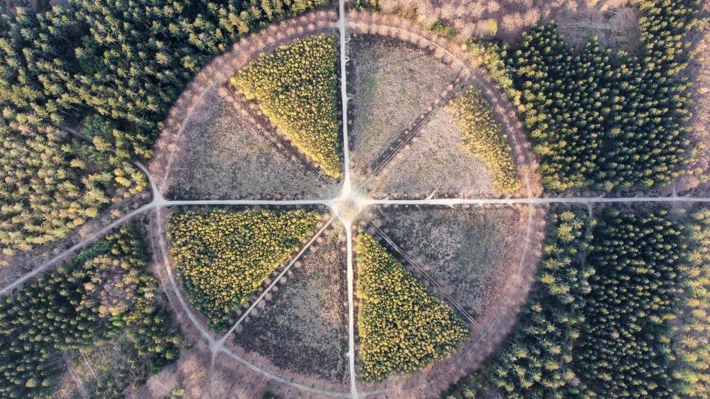 Eenzame-Eik-Dronefoto