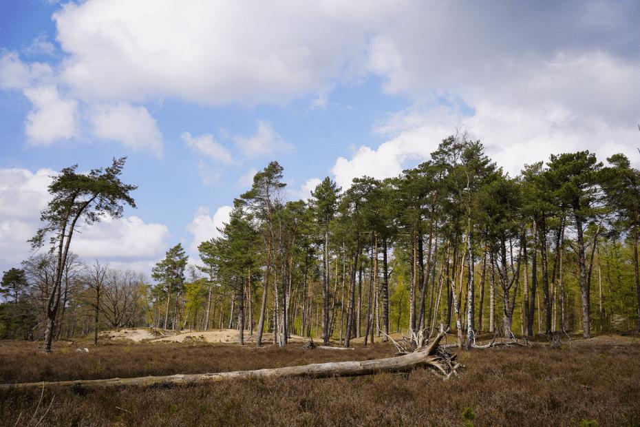 Wandelen Doorn en Driebergen: Den Treek, Henschoten en Zanderij Maarn